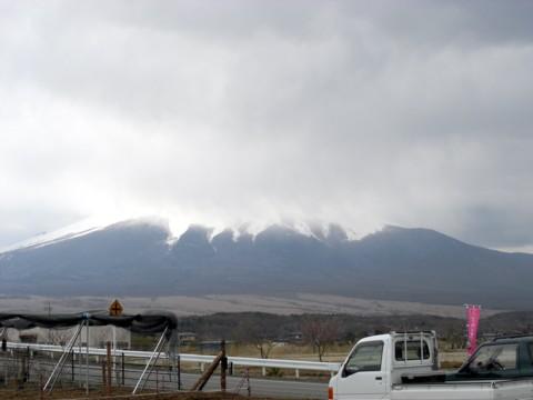 11いちご狩り富士山曇.jpg