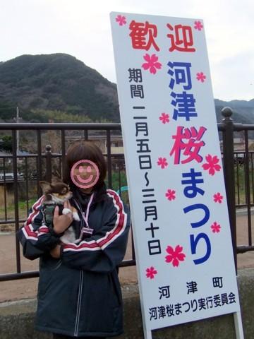 12河津桜⑤.jpg