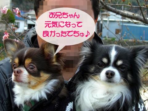 12河津桜⑦.jpg