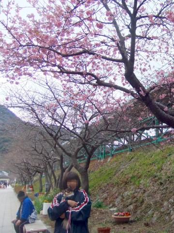 12河津桜⑪.jpg