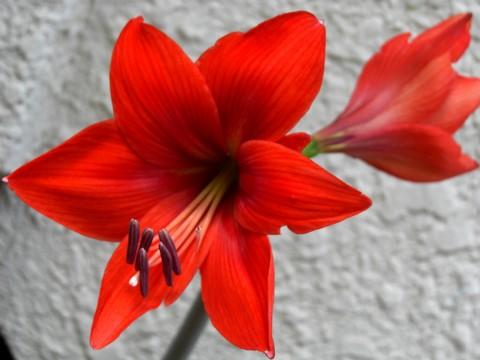 お花が咲いたでち⑬-1.jpg