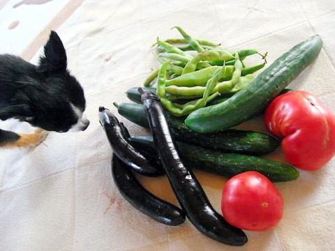 パパのママ野菜②.jpg