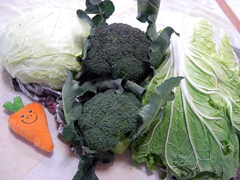 パパのママ野菜⑦.jpg