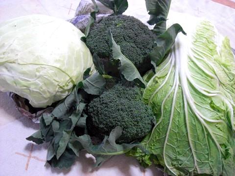 パパのママ野菜⑨.jpg