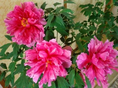 大輪の花①-1.jpg