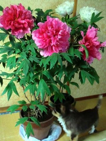 大輪の花②.jpg