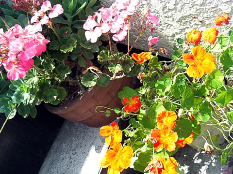 我が家の花達①.jpg