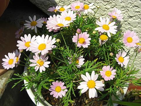 我が家の花達②.jpg