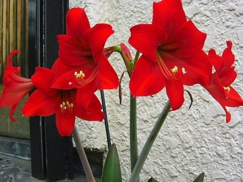 我が家の花達④.jpg