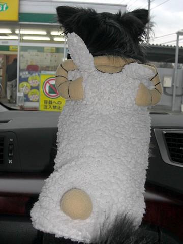 羊ちゃん②.jpg