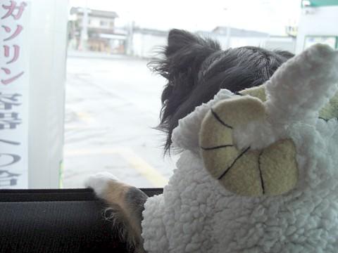 羊ちゃん③.jpg
