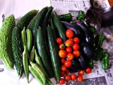 野菜がいっぱい③.jpg
