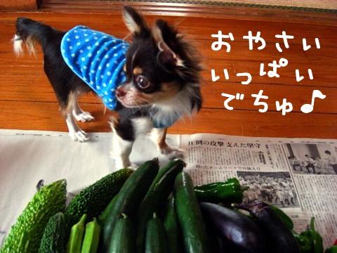 野菜がいっぱい④.jpg