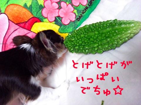 野菜がいっぱい⑨.jpg
