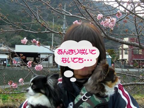 12河津桜⑧.jpg