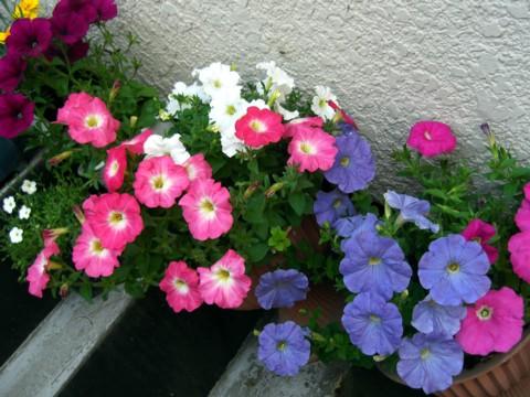 お花が咲いたでち.jpg
