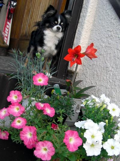 お花が咲いたでち⑥.jpg