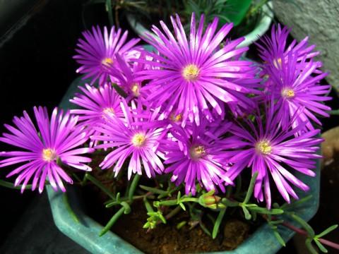 お花が咲いたでち⑯-1.jpg