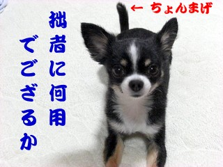 ちょんまげ①.jpg