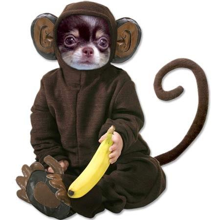 ハロウィントミ猿.jpg