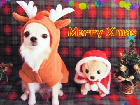 バニちゃんクリスマスカード.jpg