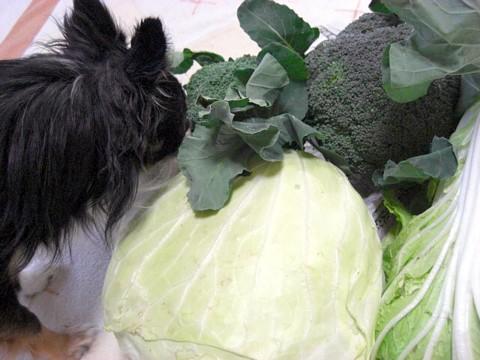 パパのママ野菜⑧.jpg