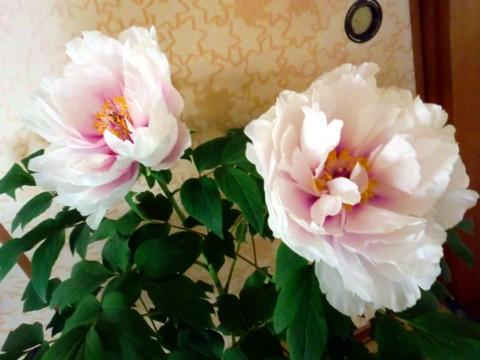 大輪の花③-1.jpg