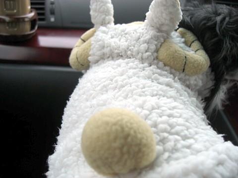 羊ちゃん①.jpg